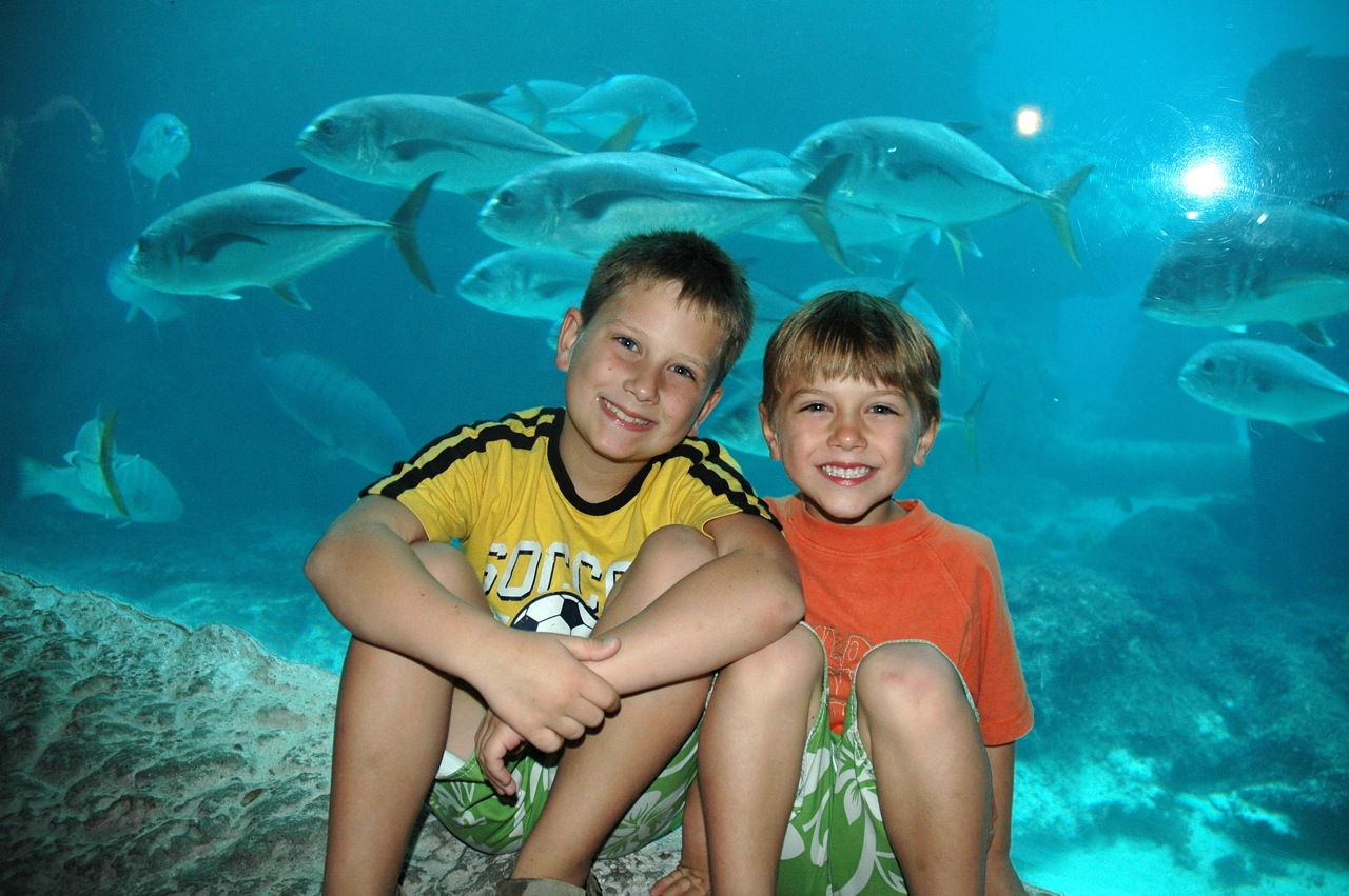 Me and my brother like the aquariums.