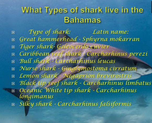 Types of Sharks in the Bahamas