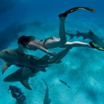 Free diving with sharks